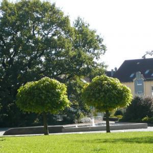 Stadtpark (Foto: Merk)