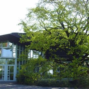 Stadthalle Gersthofen, vom Stadtpark aus (Foto Stadt Gersthofen)