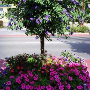 Sommerbepflanzung Augsburger Straße (Foto: Stadt Gersthofen)